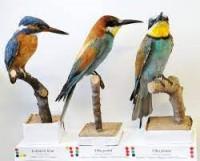 PTAČÍ ZÁŘÍ - vzpomínka na ornitologa Karla Plachetku